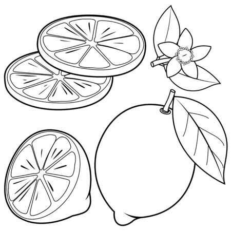 Whole and half sliced lemon fruit, lemon flowers and leaves. Vector black and white coloring page
