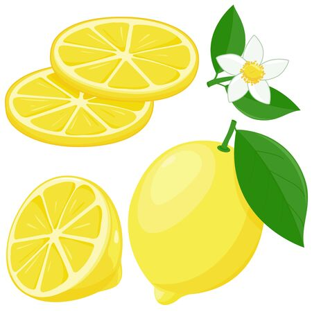 Whole and half sliced lemon fruit, flowers and leaves. Vector illustration