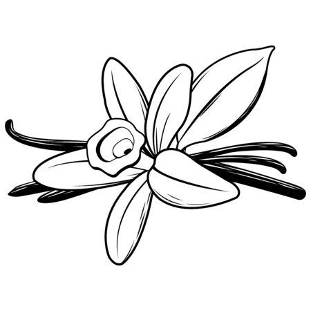 Vanilla flower and stick. Black and white illustration Иллюстрация