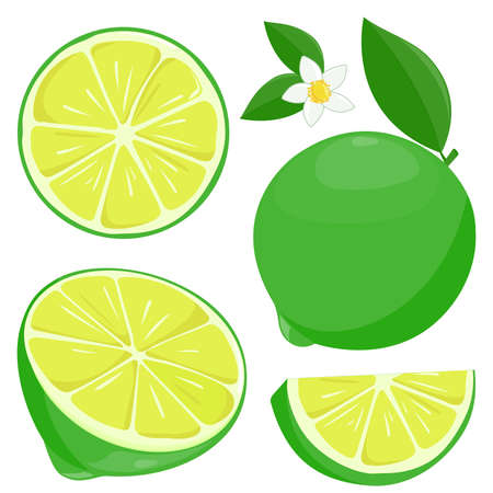 Whole and sliced lime fruit, lime flowers and leaves. illustration