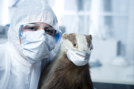 surgical mask: Researcher in protective suit and badger wearing facial surgical mask. Stock Photo