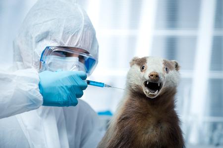 infective: Investigador en traje de protecci�n inyecci�n de un l�quido con una jeringa sobre un tej�n. Foto de archivo