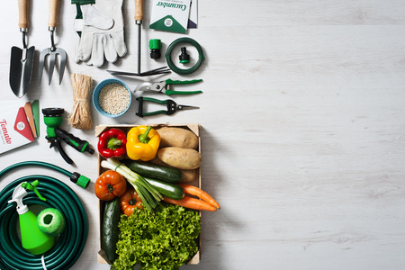 Gardening and farming tools with vegetables crate on a wooden table with blank copy space, top view