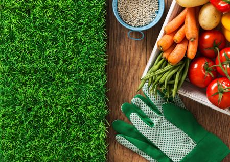 pasto sintetico: Inicio cultiva verduras frescas, semillas, guantes y hierba, vista desde arriba, la jardinería y la agricultura concepto Foto de archivo