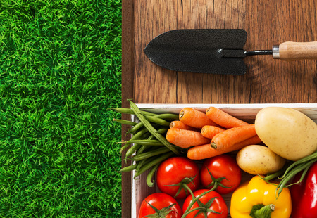 pasto sintetico: Colorful fresh vegetables in a box, trowel and green grass, gardening and farming concept