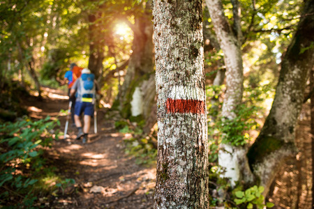 People mountain hiking in the woods, nordic walking and outdoor sports concept