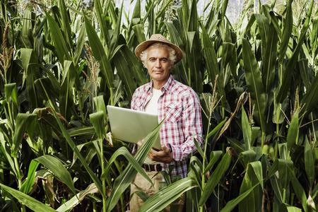 agricultor: granjero sonriente que usa una computadora port�til en el campo, las plantas de ma�z en el fondo, la tecnolog�a y el concepto de la agricultura Foto de archivo