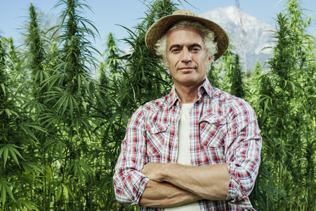 Confident farmer posing with arms crossed in his hemp field and smiling at camera