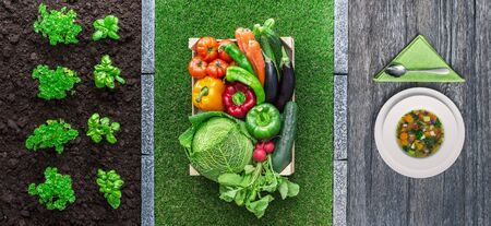 horticulture: Food from farm to table: plants growing in the garden, vegetables in the crate and vegetarian soup in a dish Stock Photo