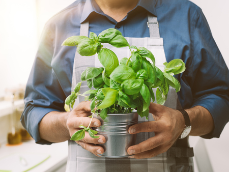 Man holding a pot with fresh basil, he is wearing an apron and cooking Stock Photo