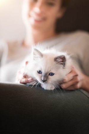 Young smiling woman lying on the sofa and cuddling a cute kitten Reklamní fotografie
