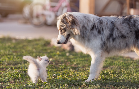Cute newborn kitten and dog playing together in the garden on a sunny summer day, pets and leisure concept