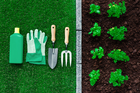 Plants and seedlings growing in the garden and gardening tools, farming and horticulture concept Stock Photo