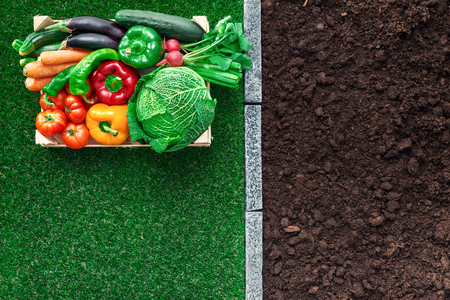 Freshly harvested vegetables in a wooden crate on the grass in the garden, gardening and healthy food concept Stock Photo