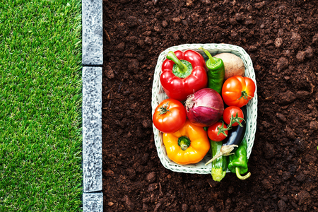 Fresh tasty vegetables in a basket on the fertile garden soil, healthy eating and farming concept Stock Photo