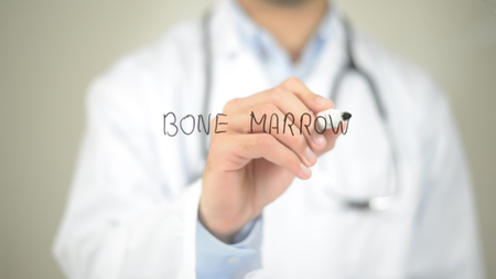 骨髄、透明なスクリーンに書く医師