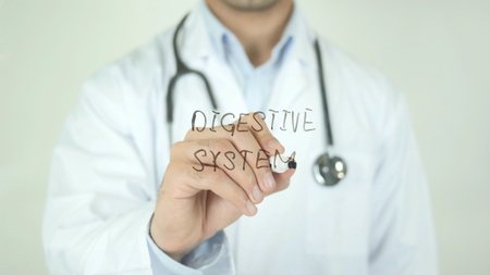 Digestive system, Doctor Writing on Transparent Screen
