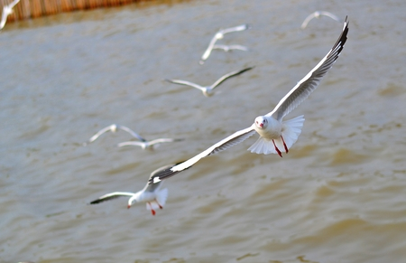 The seagulls are flying low