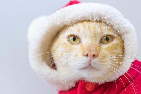Santa cat in christmas theme