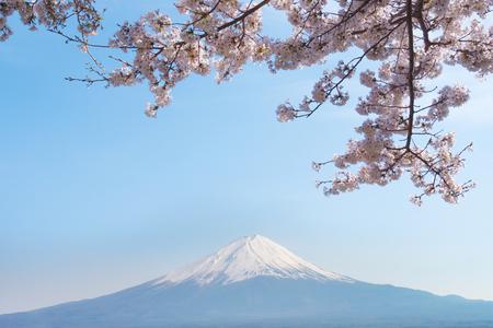 Mount Fuji in spring with sakura cherry blossom.