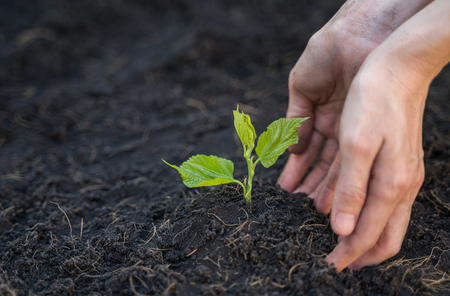Hand is growing and nurturing young plant on soil Stock Photo - 124908394
