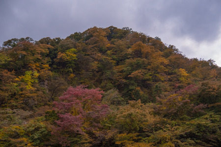 Autumn forest with many trees in the mountain.