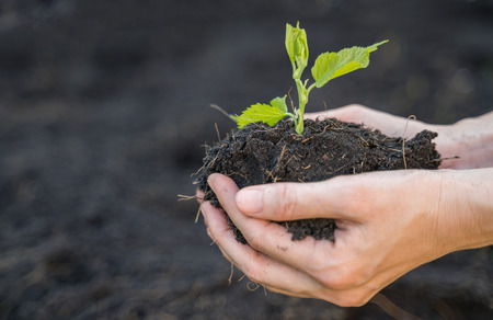 Farmer hand holding soil with sapling plant, ecology and environment concept.
