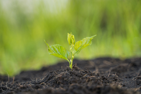Young plant growing in the morning on green nature background.