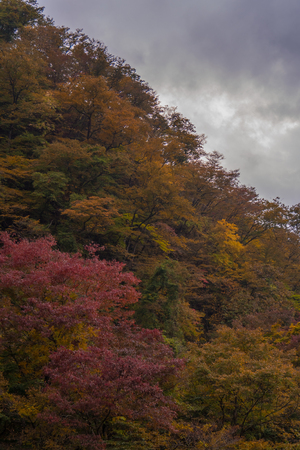 Autumn tree in forest with rain clouds. Stock Photo