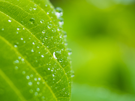 Dew on leaf and green nature background with copyspace.