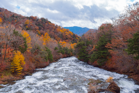 Stream river in autumn forest, beautiful nature of tree in fallen leaves.