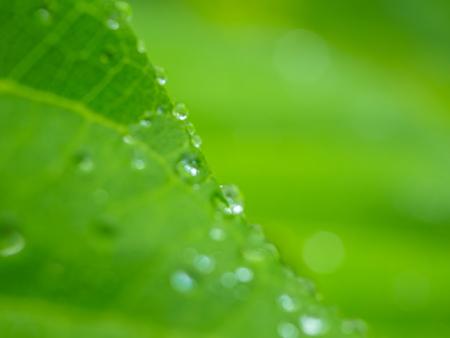 Blurry drops of dew on leaf nature background. Reklamní fotografie