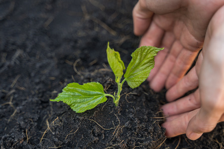 Planting a young seedling, agriculture and farming concept. Stock Photo