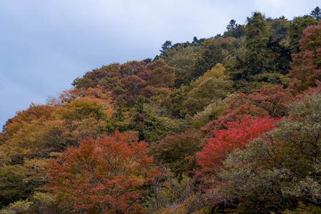 Beautiful view of colorful trees on the mountain. Autumn nature landscape.