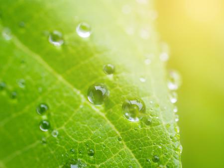 Dew on leaves in close up. Reklamní fotografie