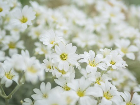 White flowers blooming close up.