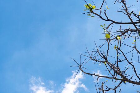 Branches tree without leaves on blue sky with copyspace for your text.