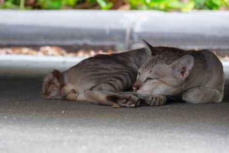 Close up of sleep cat on ground. Stock Photo