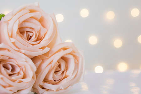 Sweet color rose on white background with bokeh lights and copyspace for text.