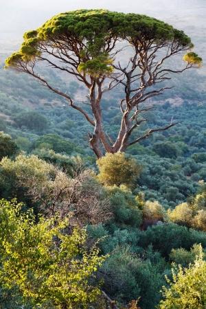 impressive: Impressive tree
