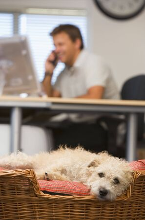 Dog lying in home office with man in background photo