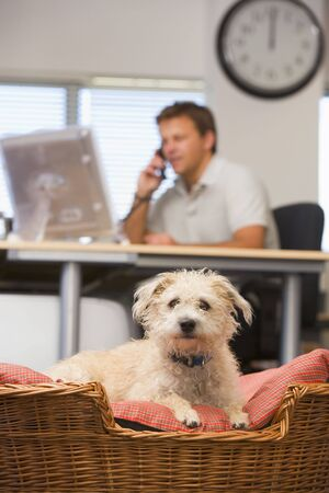 Dog lying in home office with man in background Stock Photo - 3461190