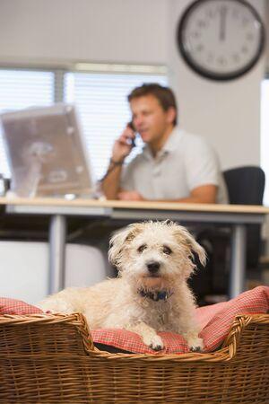 dogs sitting: Perro acostado en la oficina en casa con el hombre en el fondo