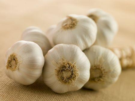 Bulbs of Garlic photo