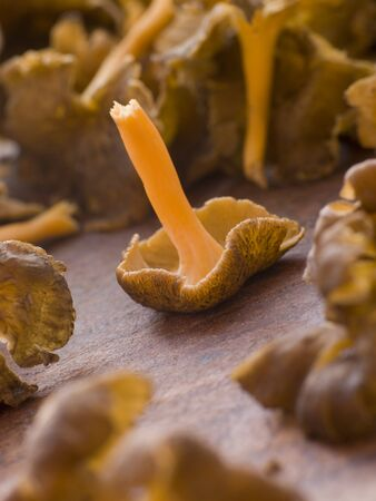 Fresh Girolle Mushrooms photo