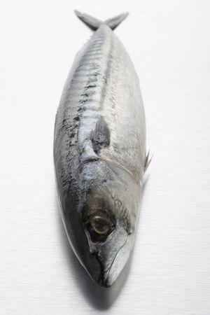 wallingford: Fresh Fish On Bench Stock Photo