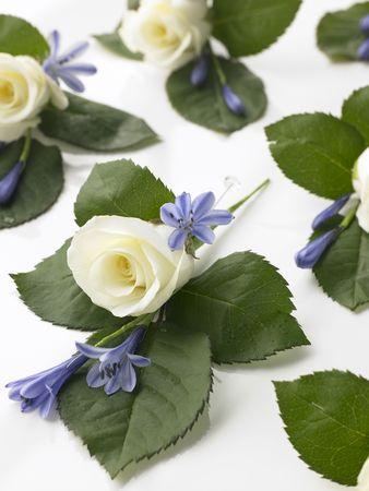 Con caja de relleno Rosa Blanca ramilletes Foto de archivo - 4638799