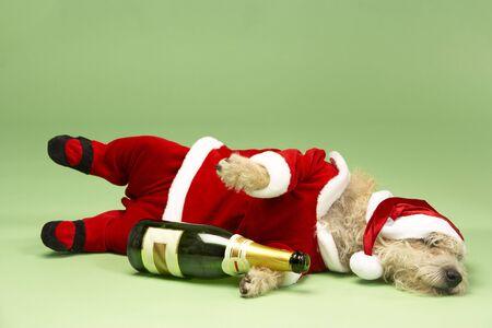 botella champagne: En Santa Samll Perro acostado Vestuario Con la botella de Champagne Foto de archivo