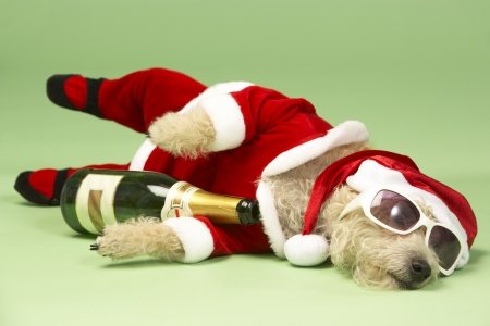 dressing up costume: Samll Dog In Santa Costume Lying Down With Champagne and Shades Stock Photo
