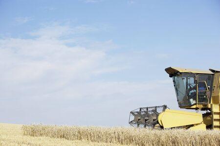 combine harvester: Cosechadora en el Campo de Trabajo